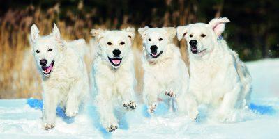 Jak se postarat o psa v zimě?