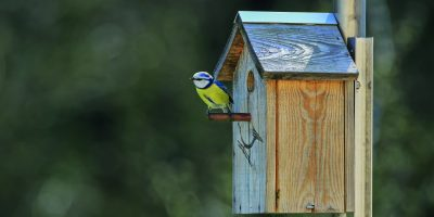 Přichystejte ptačí budky