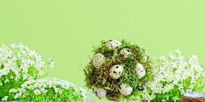 Mechový stromek s vajíčky