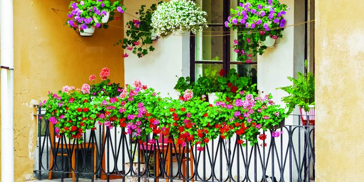 Květiny pro každý balkon