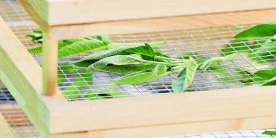 Letní sušička na bylinky