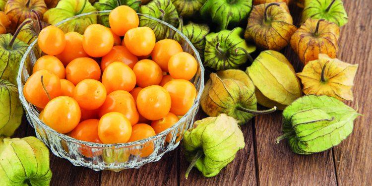 Mochyně – zelenina s chutí ovoce