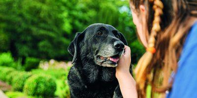 Jak pečovat o stárnoucího psa?