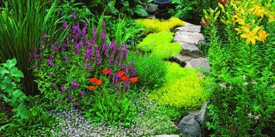 Rostliny do vlhkých zákoutí